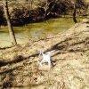near creek.jpg