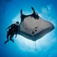 Diver0258